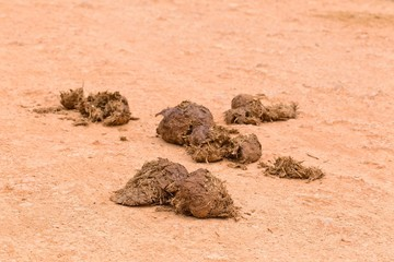 Fresh elephant dung on a gravel road