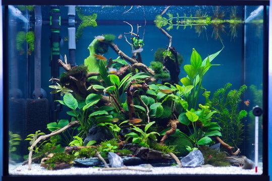 algae and fish in the aquarium