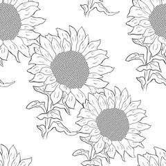 seamless pattern  sunflower flower with seeds.  illustration