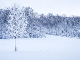auf einem Feld im Winter
