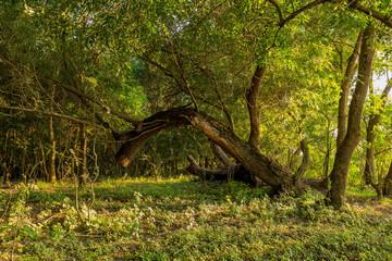 Danube delta untouched vegetation
