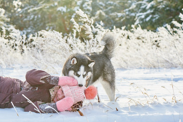 Siberian Husky dog and little girl child playing in a snowy winter forest