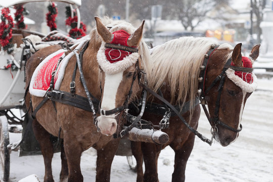 Decorated Christmas Horses and Carriage. Beautiful horses in the street