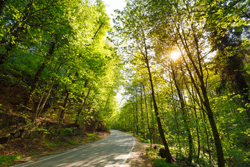 street Forest, with sunlight through trees, Germany, Bavaria