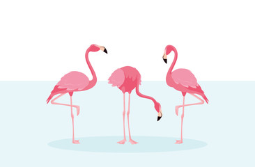 beautiful flamingos birds flock standing