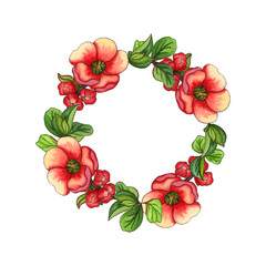 Watercolor illustration. decorative wreath with watercolor drawings of   Japanese quince on white background.