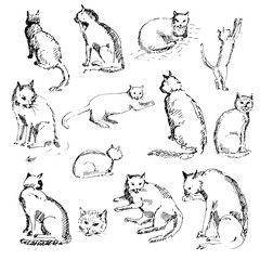 Hand drawn set of cats. Cats in different poses. Sketch, vector illustration.