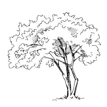 Hand drawn tree. Vector illustration.