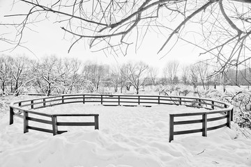 winter day and snow covered trees in a park black and white
