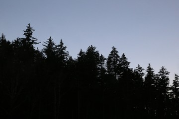 Silhouette of tree line at sunset