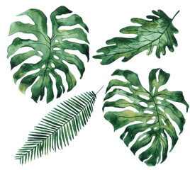 Tropical leaves set. Jungle, botanical watercolor illustrations, floral elements, palm leaves, monstera leaves and others.