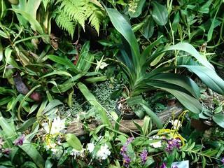 Fototapeta Kreatywna grafika roślinna świetnie nadaje się na tło baneru. Abstrakcyjne tło roślinne. Graficzny nowoczesny wzór.  obraz
