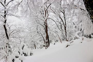 """대한민국 제주도에 있는 """"한라 산""""의 겨울 풍경이다."""