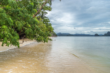 Leaning trees above the sea and the beach, rainy day. El Nido, Palawan, Philippines. August 2018.