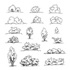 Set of hand drawn architect shrubs, vector sketch, architectural illustration