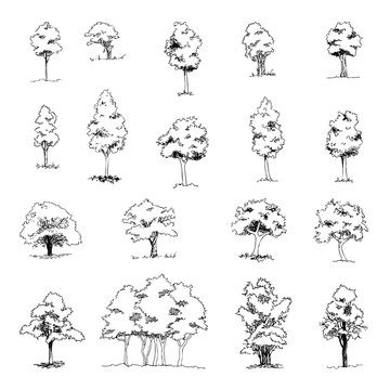 Set of hand drawn architect trees, vector sketch, architectural illustration