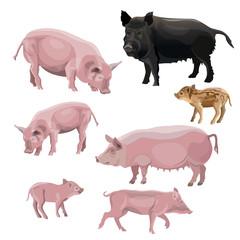 Domestic pig vector