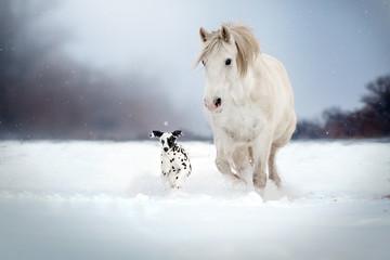 Dalmatian dog and white horse best friends beautiful winter portrait magic look