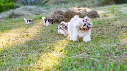 Cachorros correndo atrás da mãe