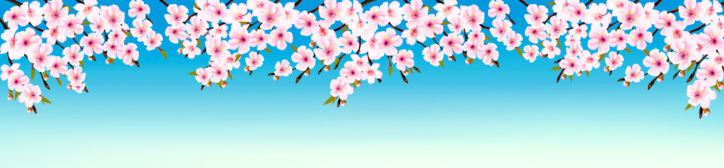Wall Mural - Spring nature panorama with branches of a blossoming sakura. Vector.