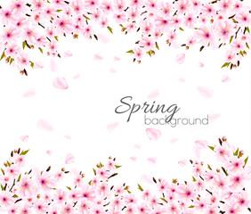 Fototapete - Spring nature background with Sakura japan cherry branch. Vector