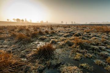 Morning field landscape. Rural landscape. Sunrise.