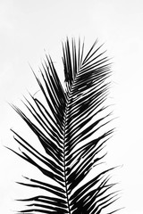 perfect palms leaf on white background
