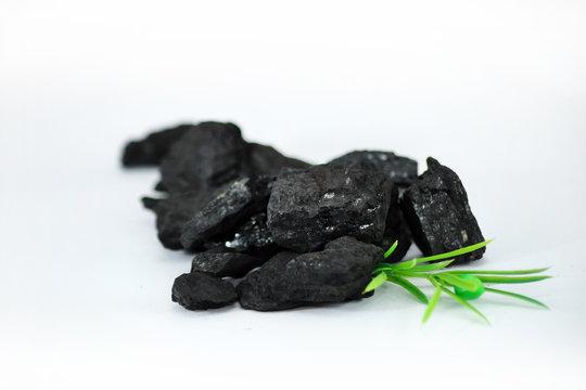 Węgiel kamienny z rośliną