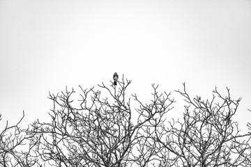 bird on the winter tree