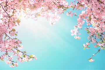 Frame of branches of blossoming cherry against background of blue sky and fluttering butterflies in spring on nature outdoors. Pink sakura flowers soft focus, dreamy romantic  image of spring nature. Wall mural