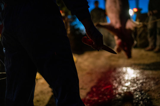 Man with knife in pig slaughter