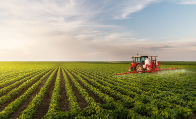 Tractor spraying pesticides at  soy bean field Wall mural