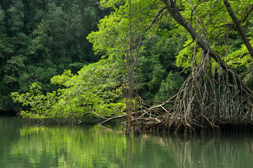 Green rainforest river. Los Haitises National park in Dominican Republic.
