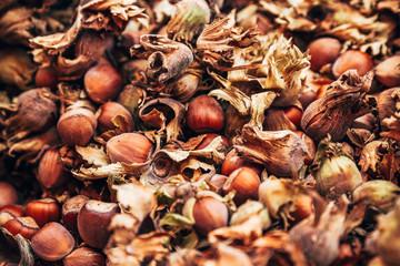 Kentish Cobnuts Hazel Nuts on a Market Counter