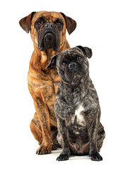 group of funny dogs waching in studio