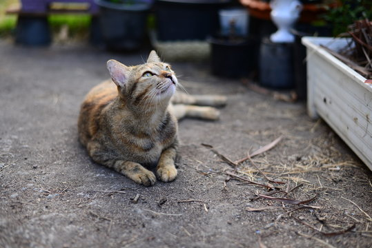 A Young grey tabby cat looking to the sky and resting on the Cement floor