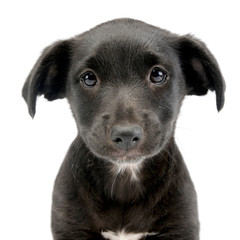 Portrait of a cute Mixed breed dog puppy