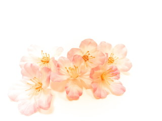 重なる桜の花びら・桜