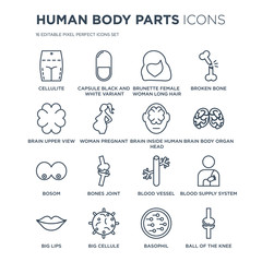 16 linear Human Body Parts icons such as Cellulite, Capsule black and white variant, Big Cellule, Lips modern with thin stroke, vector illustration, eps10, trendy line icon set.