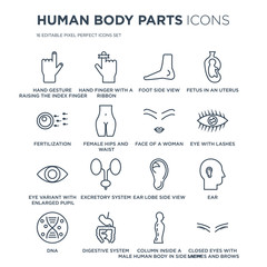 16 linear Human Body Parts icons such as Hand gesture raising the index finger, finger with a ribbon modern thin stroke, vector illustration, eps10, trendy line icon set.