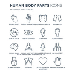 16 linear Human Body Parts icons such as Heart, hand bones, Hip Bone, Abdomen, Artery modern with thin stroke, vector illustration, eps10, trendy line icon set.