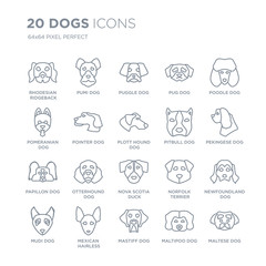 Collection of 20 dogs linear icons such as Rhodesian Ridgeback dog, Pumi Mastiff Mexican Hairless Dog Mudi dog line icons with thin line stroke, vector illustration of trendy icon set.