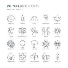 Collection of 20 nature linear icons such as Chestnut, Cedar, Alstroemeria, Anemone, Anthurium, Cannabis, Birch, Baobab line icons with thin line stroke, vector illustration of trendy icon set.