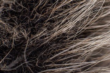 Long wool on a dark background