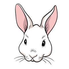 Rabbit head isolated