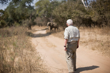 Senior adult man watching an elephant cross a dirt road.