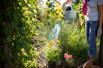 Woman watering her outdoor flower garden with a watering can.