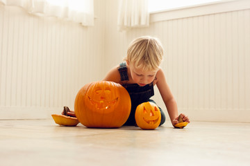 Young boy holds the stalks of a big Jack O'Lantern and a small Jack O'Lantern in each hand and leans over to look at the candles inside the pumpkins as he sits behind them on a floor.