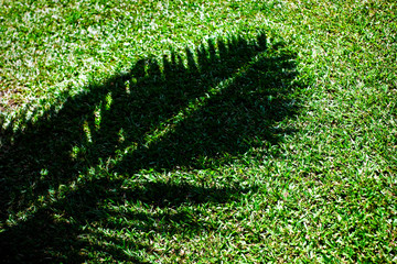Shadow of a palm frond on green grass.