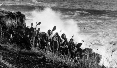 Black and white photo on the cliff which is located on the seashore grows a cactus